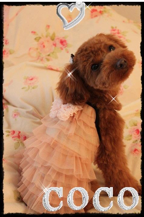 画像5: 【豪華】チュールキャミドレス オーダー♪